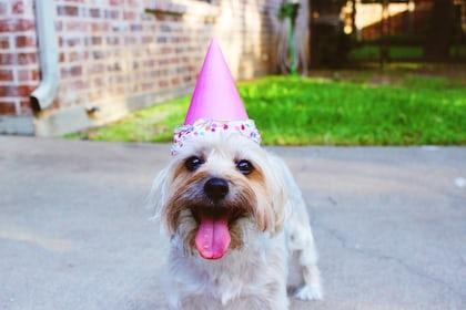 How to Celebrate Your Dog's Birthday in Mumbai