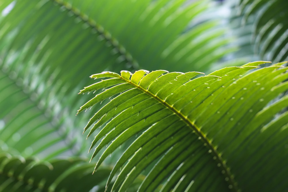selective focus photography of green leafe