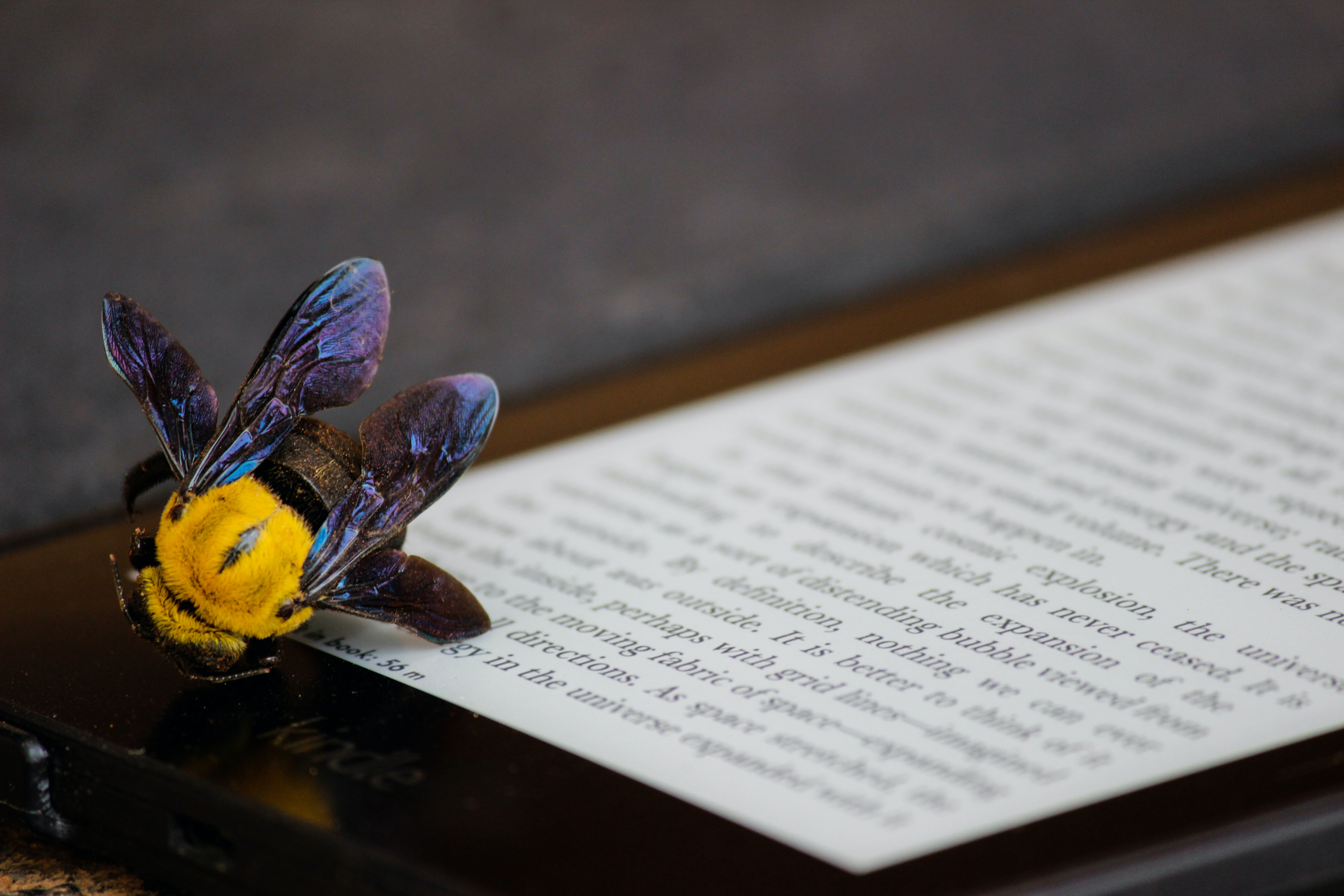 yellow and purple bumble bee on Kindle E-book reader