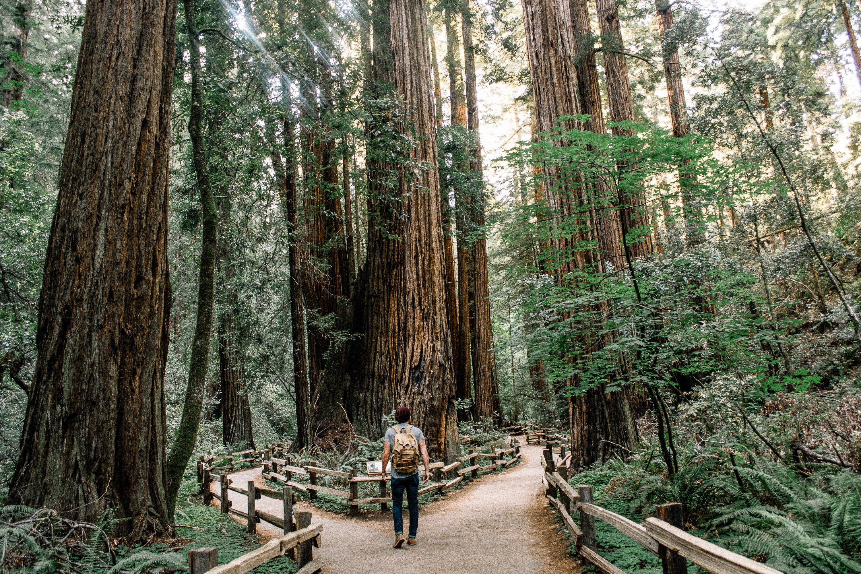 A man wearing jeans and a backpack walking down a trail through the Muir Woods