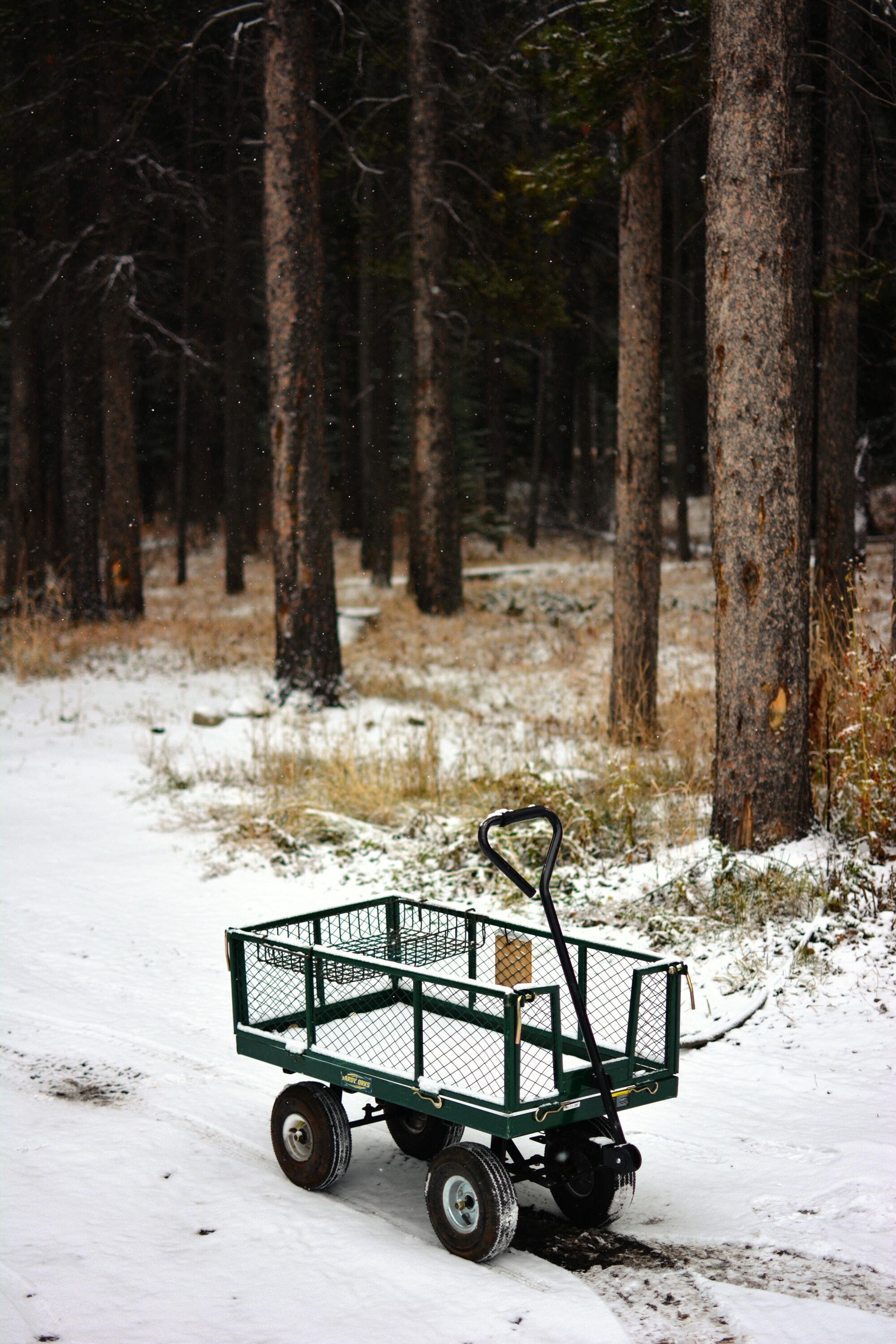 A small empty handcart on a snowy path at the edge of the forest
