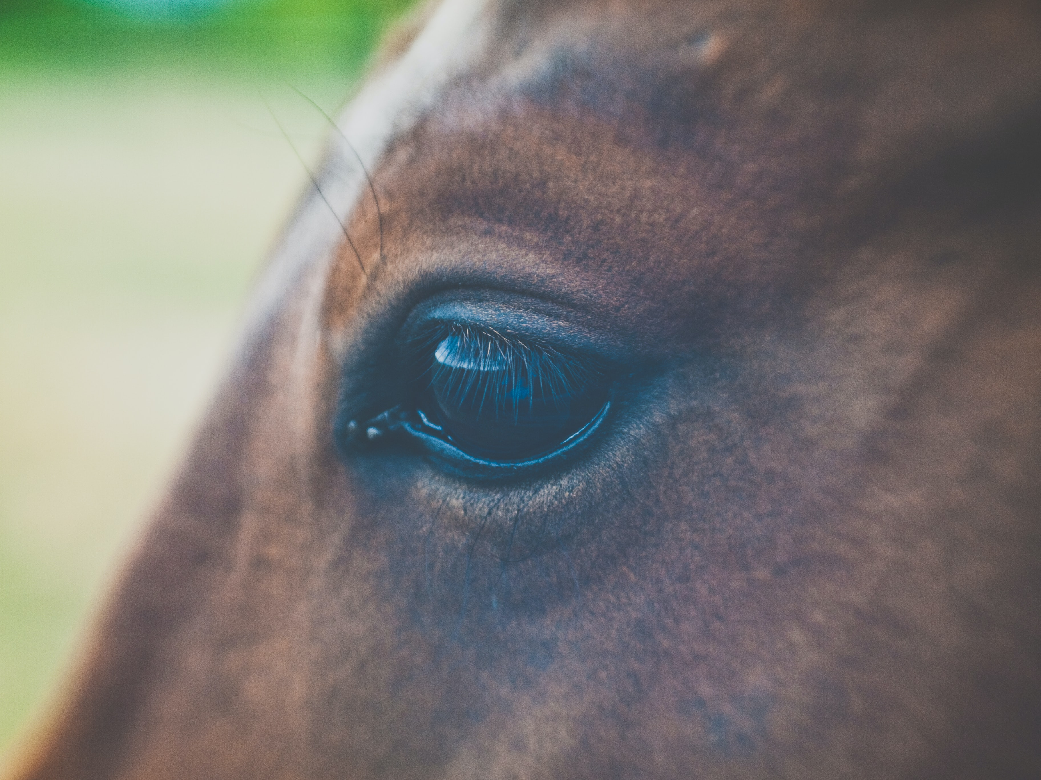 A close-up of a brown horse's eye