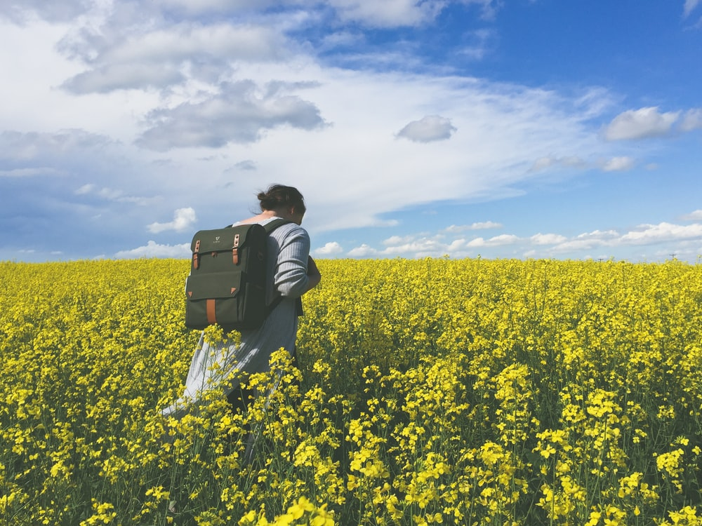 person in a yellow flower field during daytime