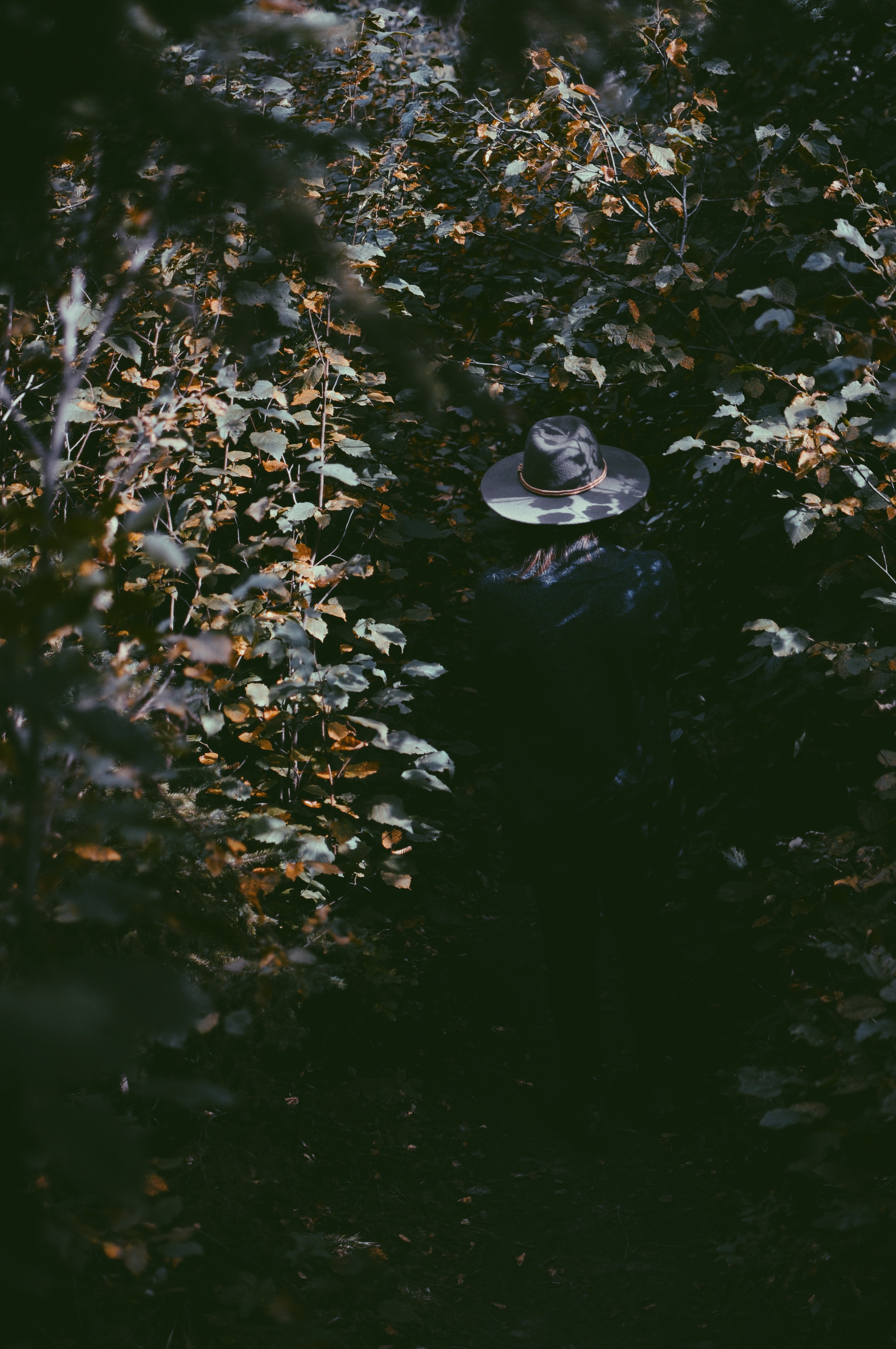A hat sitting on a fence, surrounded by leaves at Mactaggart Sanctuary