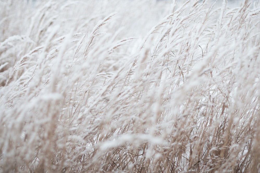 photography of white grass field