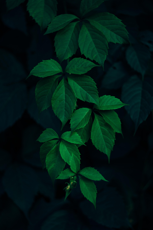 green  leafe  leaf and dark hd photo by rodion kutsaev   frostroomhead  on unsplash