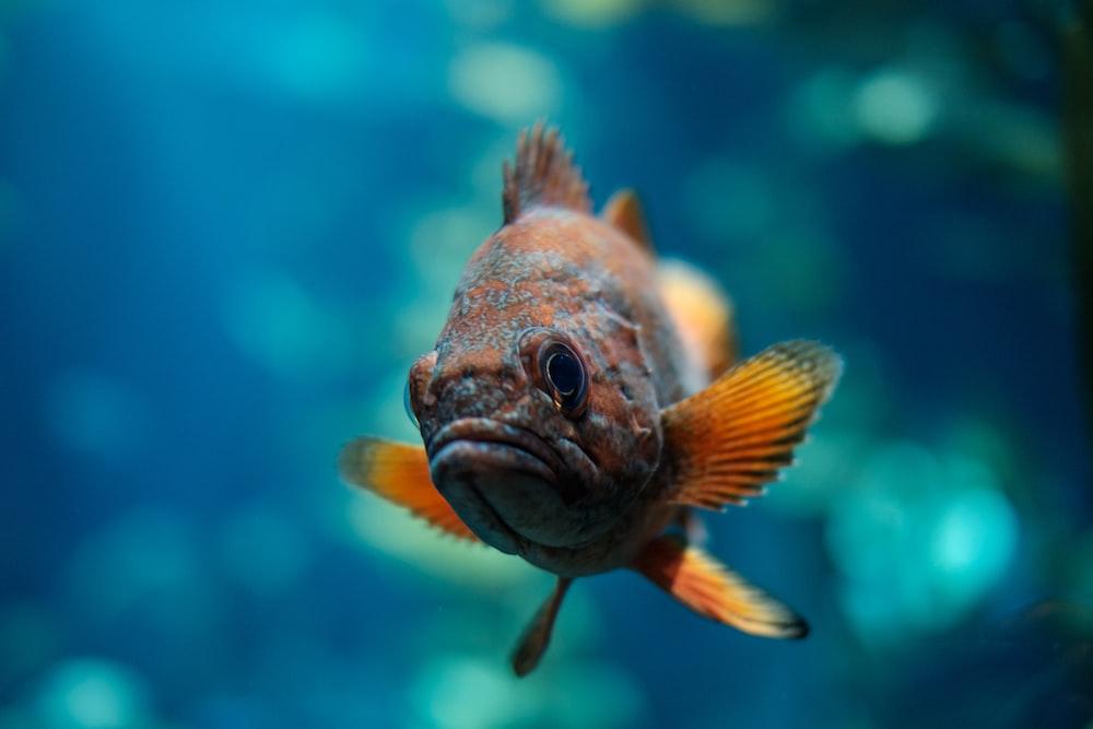 macro shot of orange and brown fish