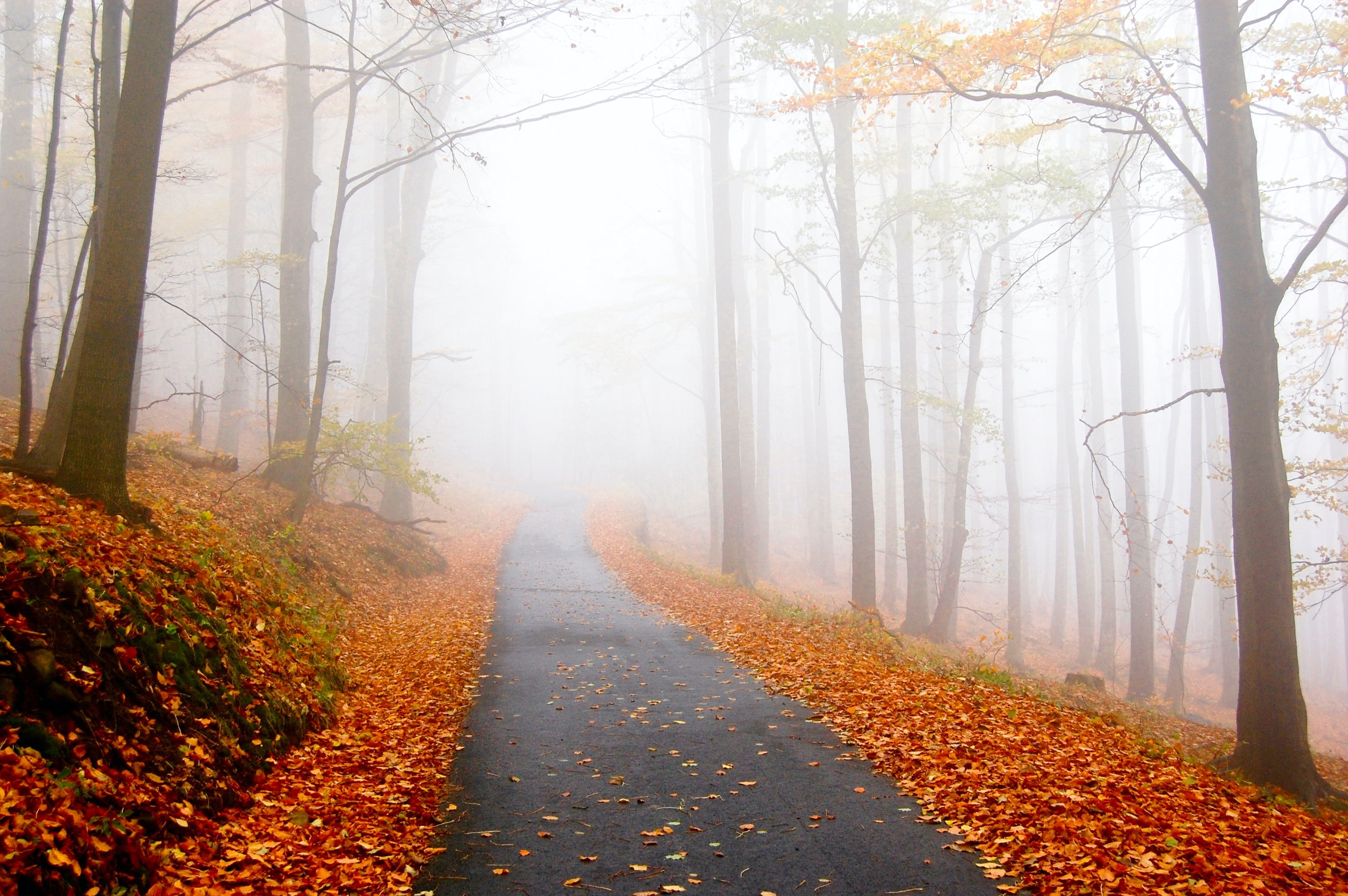 A foggy, mountain road full of fall foliage and red and orange leaves on the trees and ground