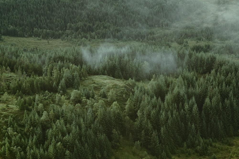 high angle photography of trees