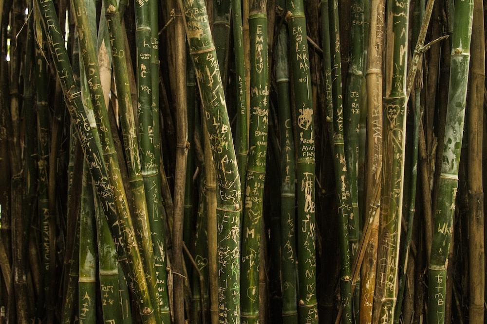 closeup photo of green bamboo sticks
