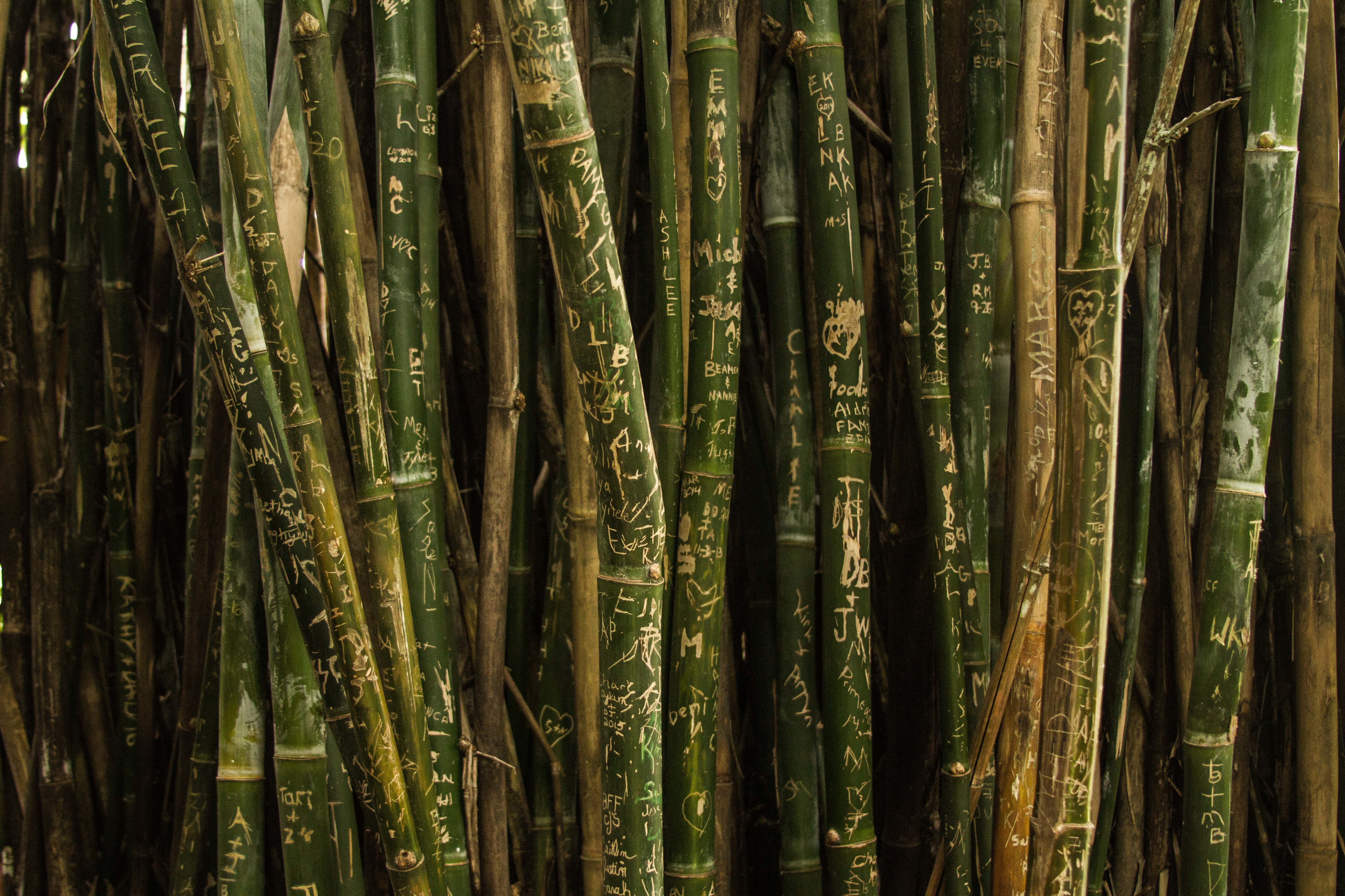 Bamboo stems covered with frivolous etchings