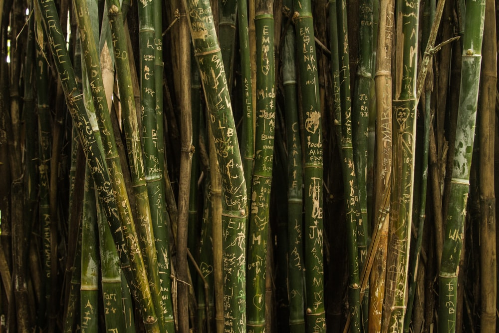 closeup photo of green bamboo sticks
