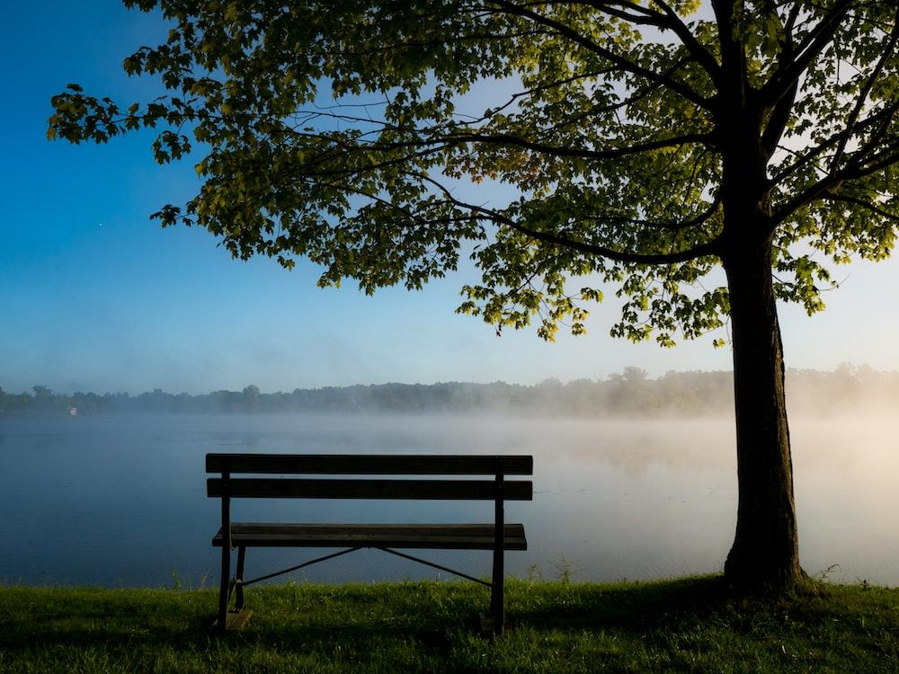 black park bench under trees