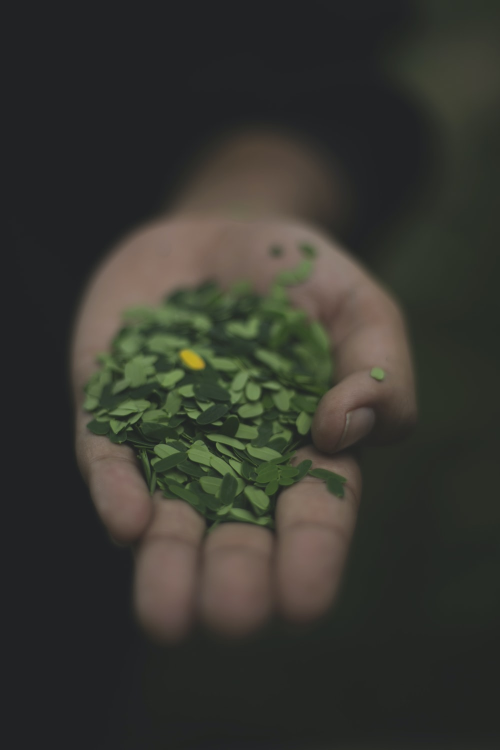 person holding tamarind leaves
