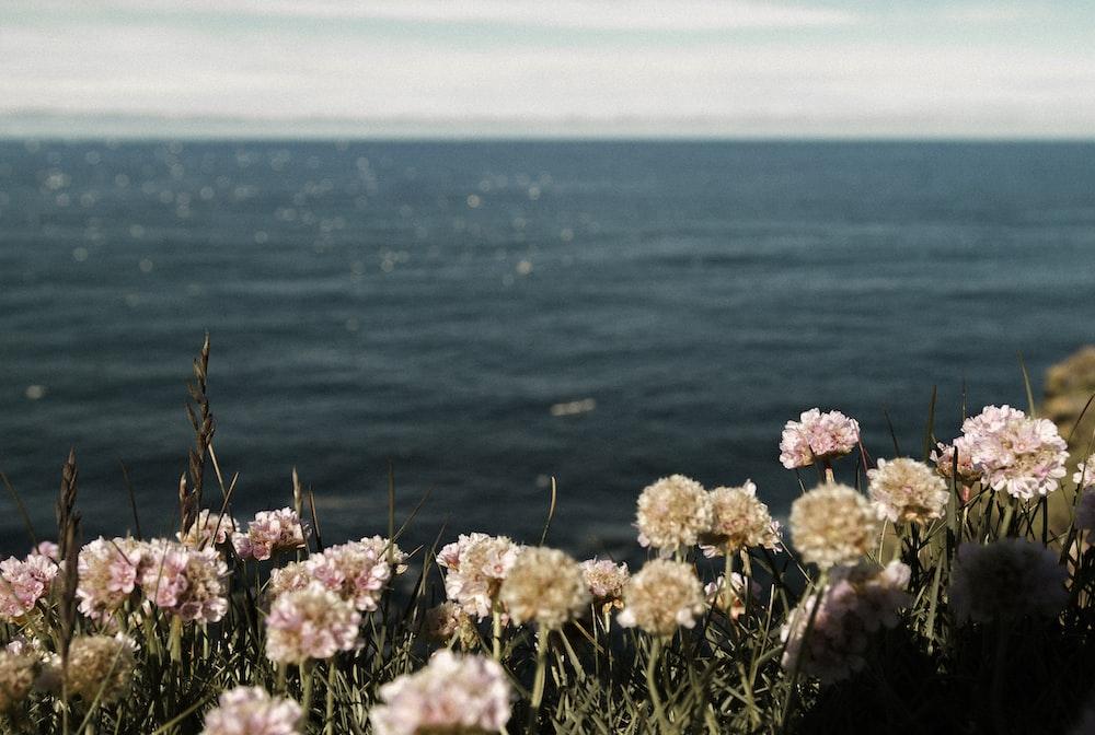 pink flowers near the ocean