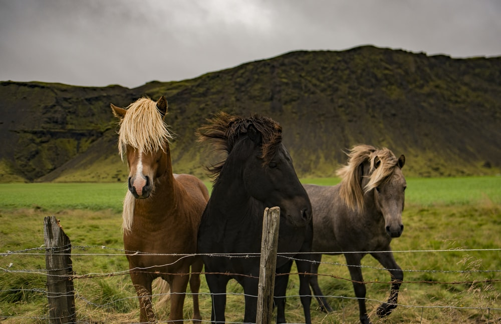 three assorted horses