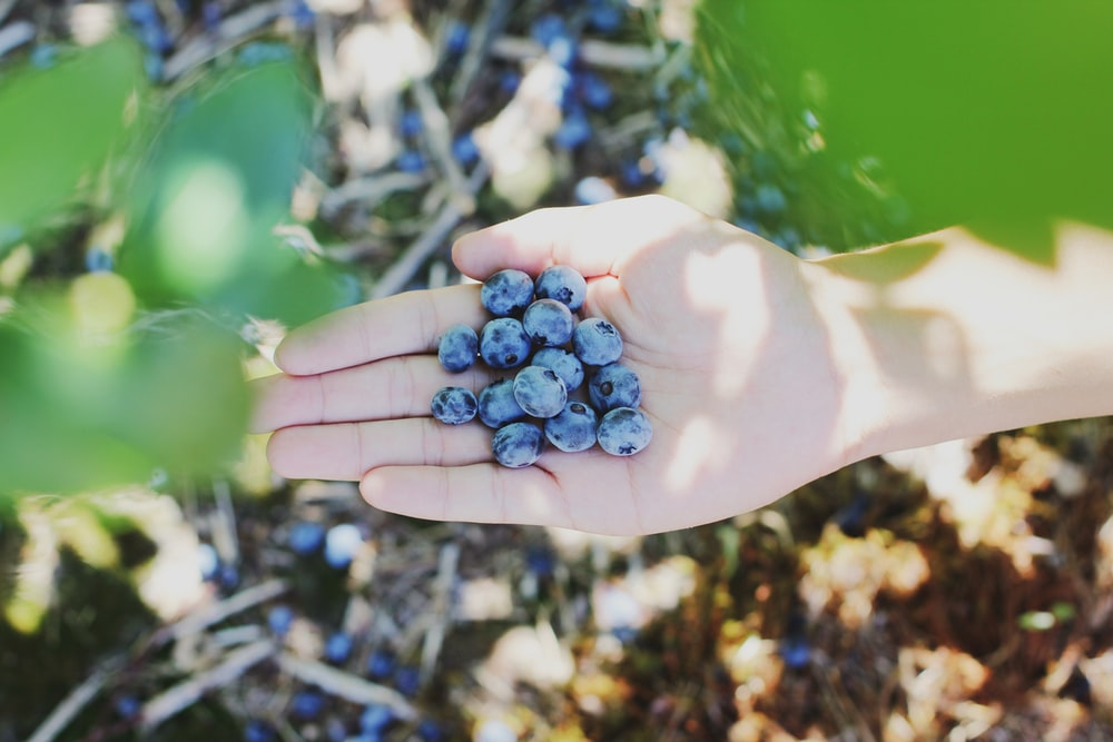 blueberries on person's palm