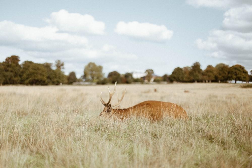 brown animal on grass field