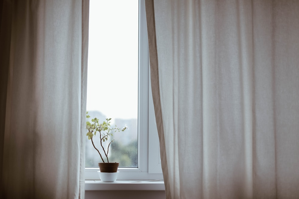 potted plant on window with curtain