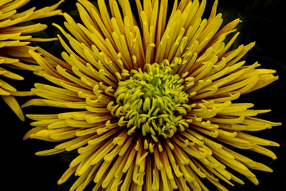 focus photo of yellow cluster flower