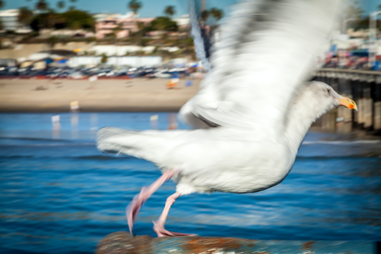 Free Unsplash photo from Cris Saur