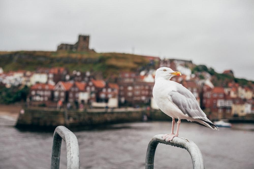seagull standing on gray steel bar