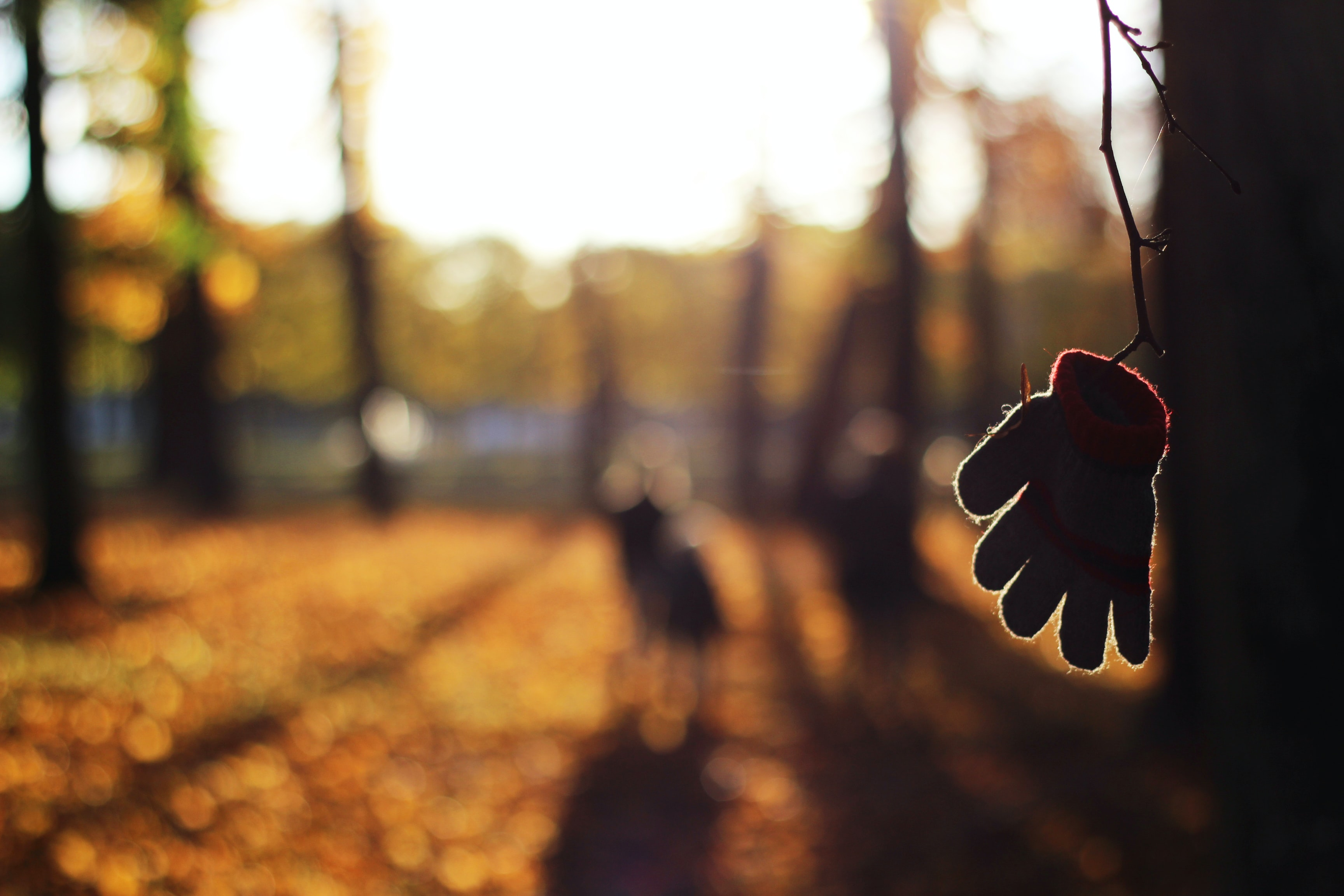 A child's glove hooked to a branch on a tree, with the blurry view of a bright orange light and shadow
