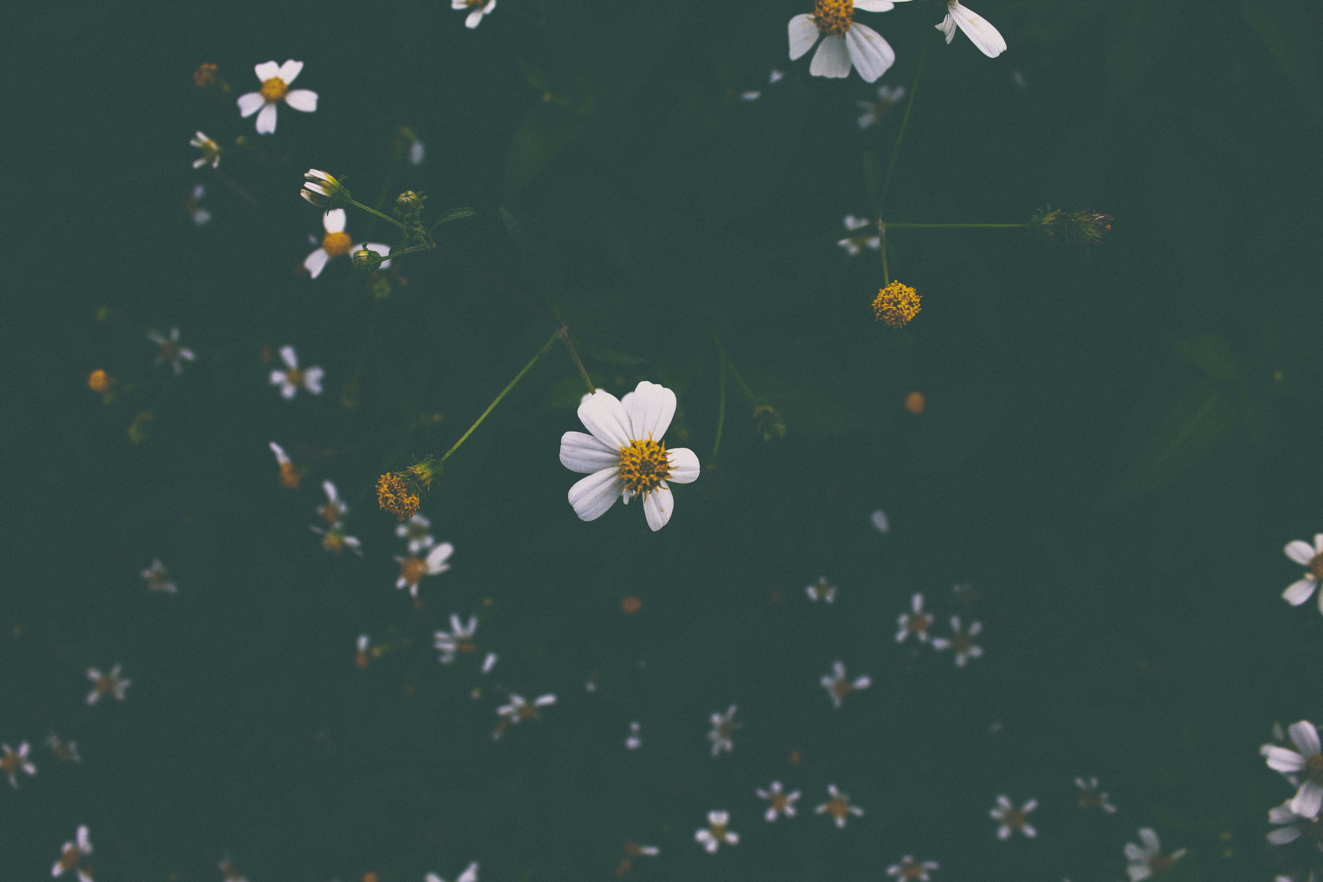 close shot of white and yellow flowers