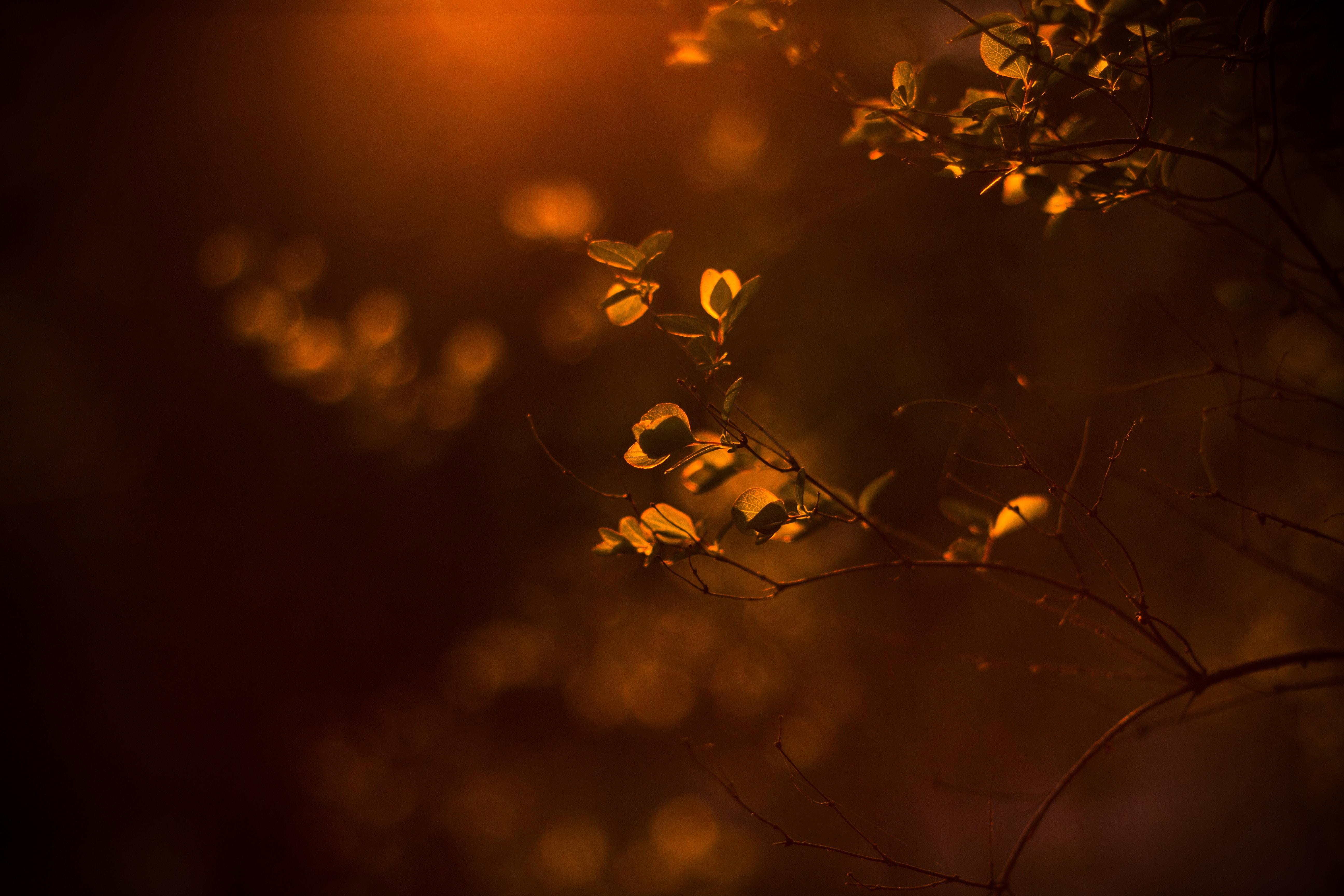 tilt shift lens photography of brown plant