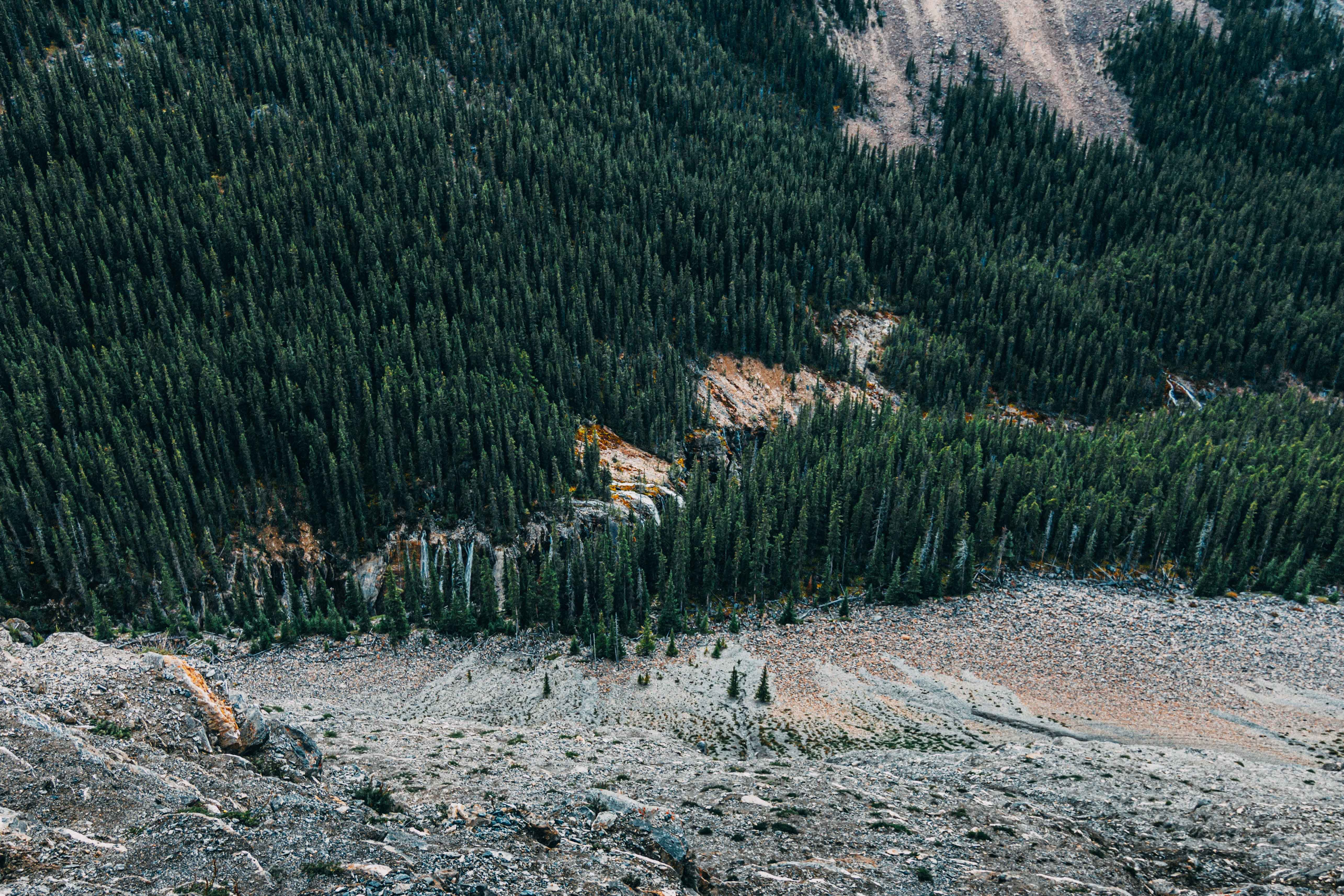 A high-angle shot of a vast coniferous forest at the foot of a hill in Jasper