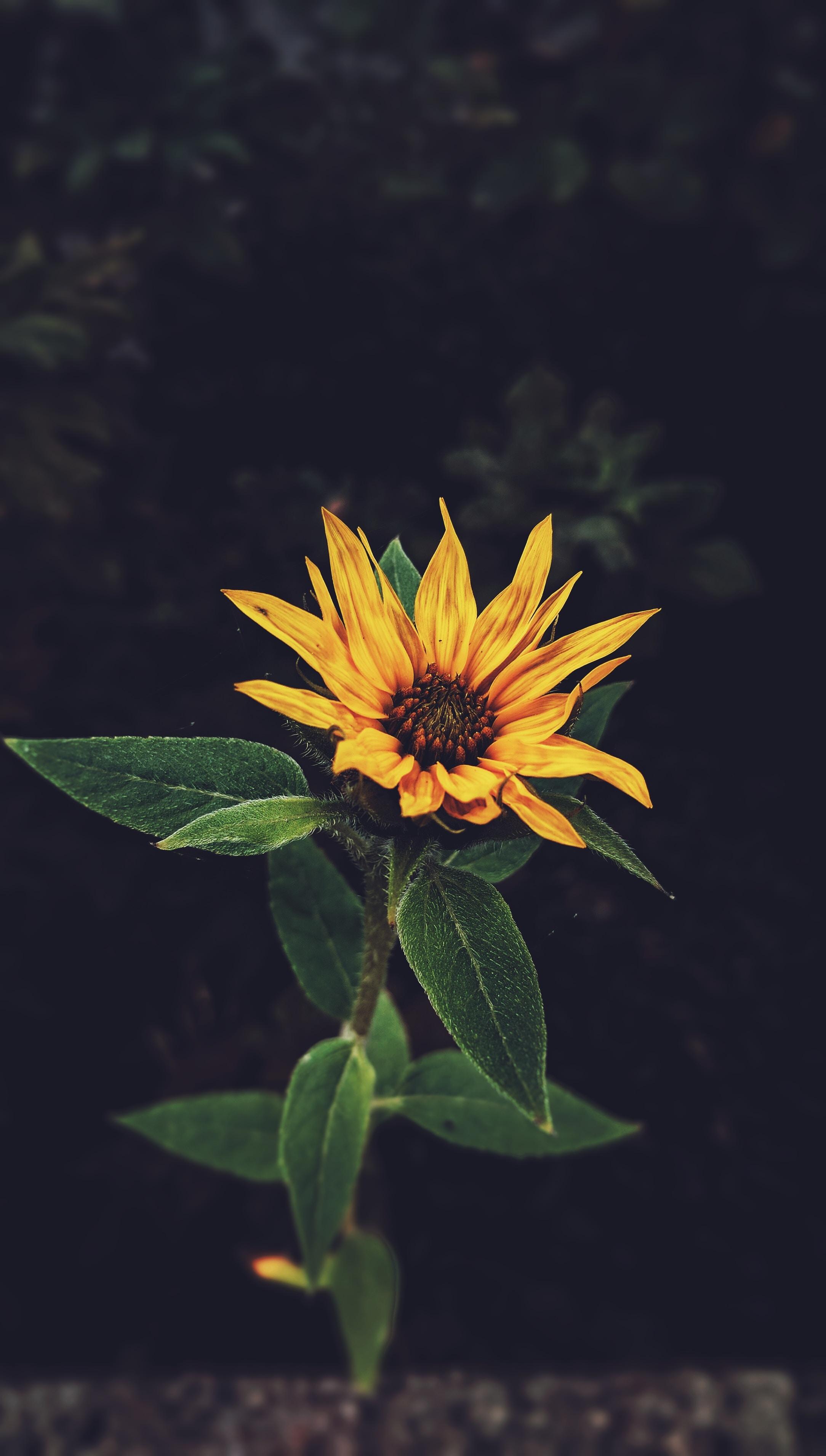 An overhead shot of a single yellow wild flower