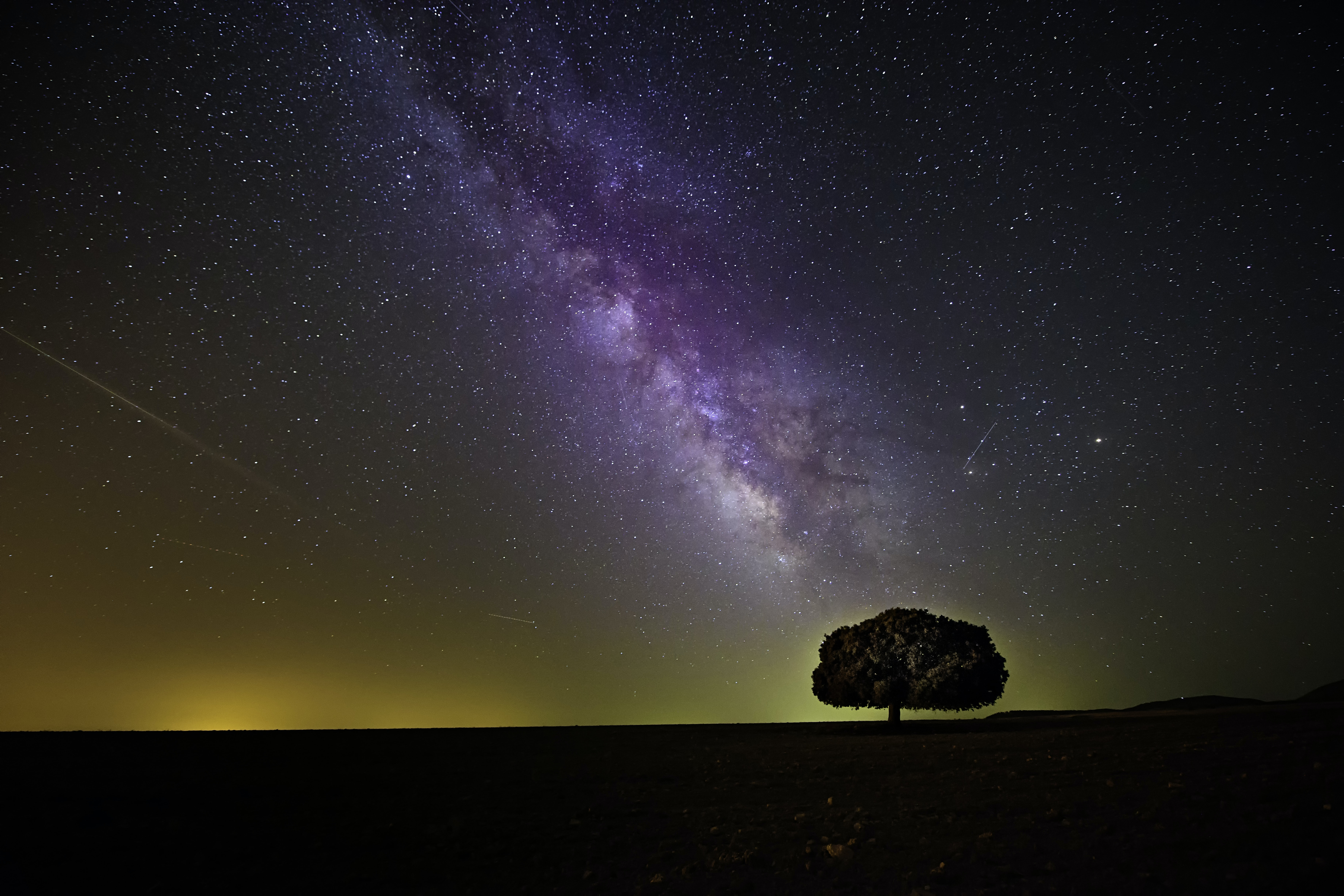 tree during night time with purple sky