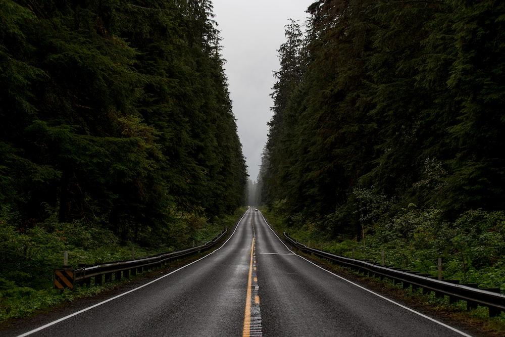 gray road between green trees