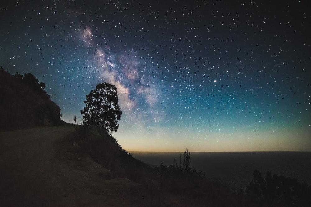 tree near cliff under starry night