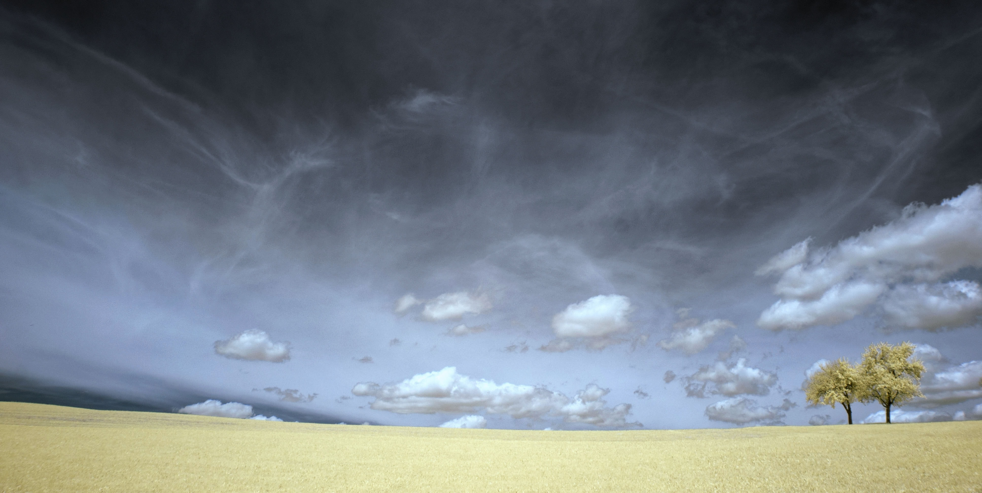 A dark, stormy sky above two lone trees in a barren field