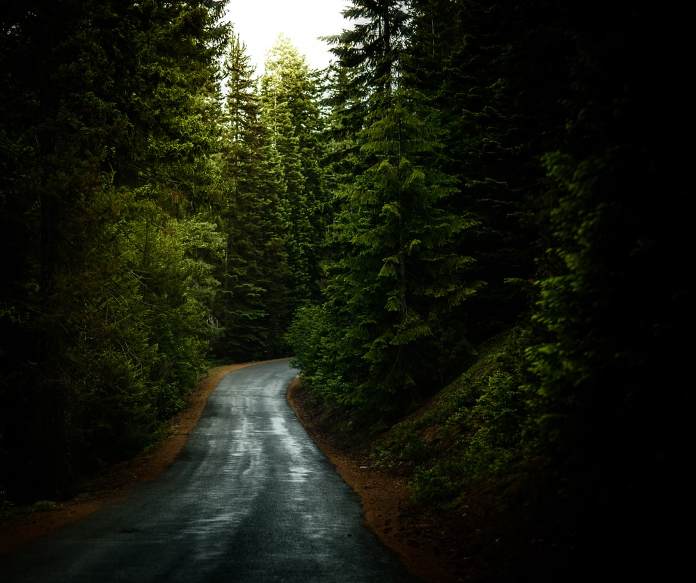 asphalt road surrounded by green leafed trees