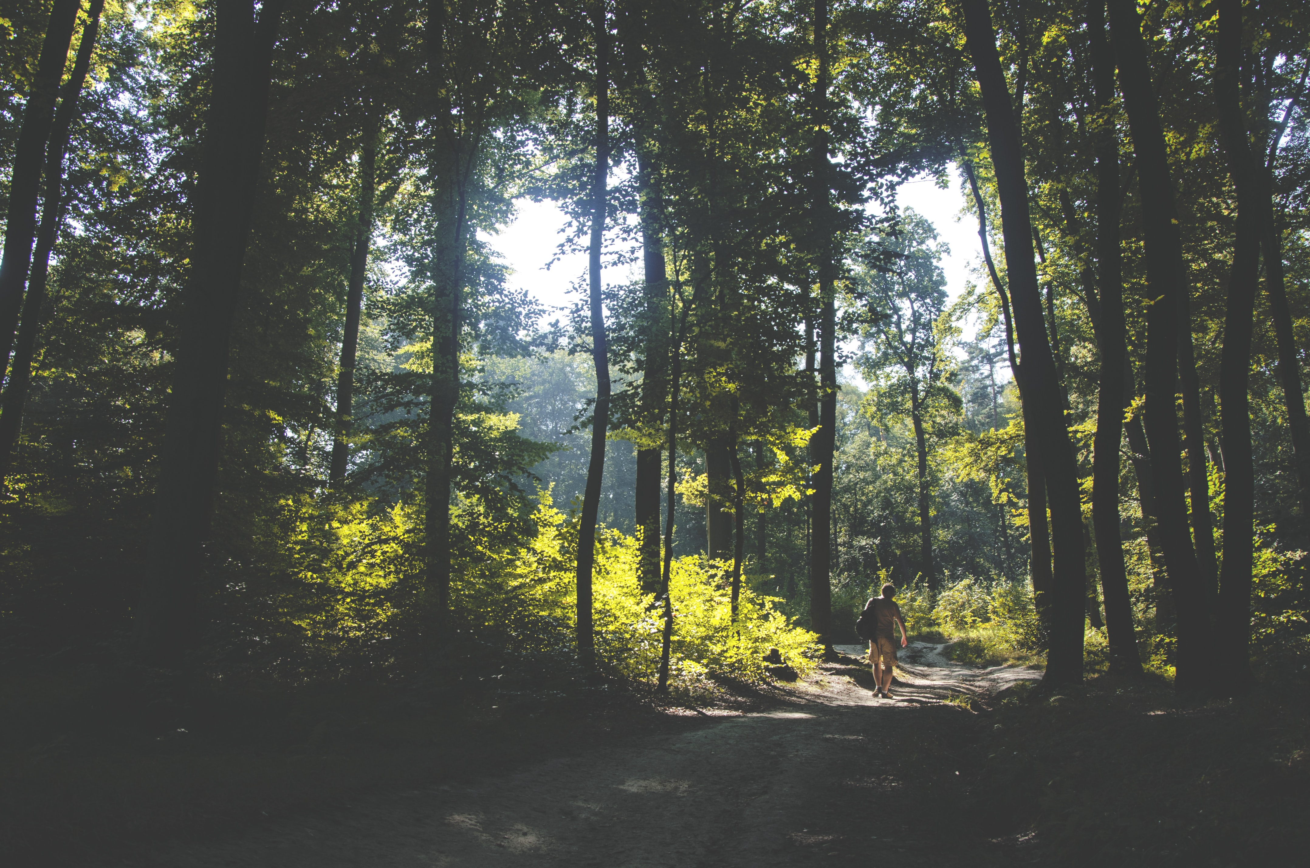 person walking on path surrounded by green leafed trees