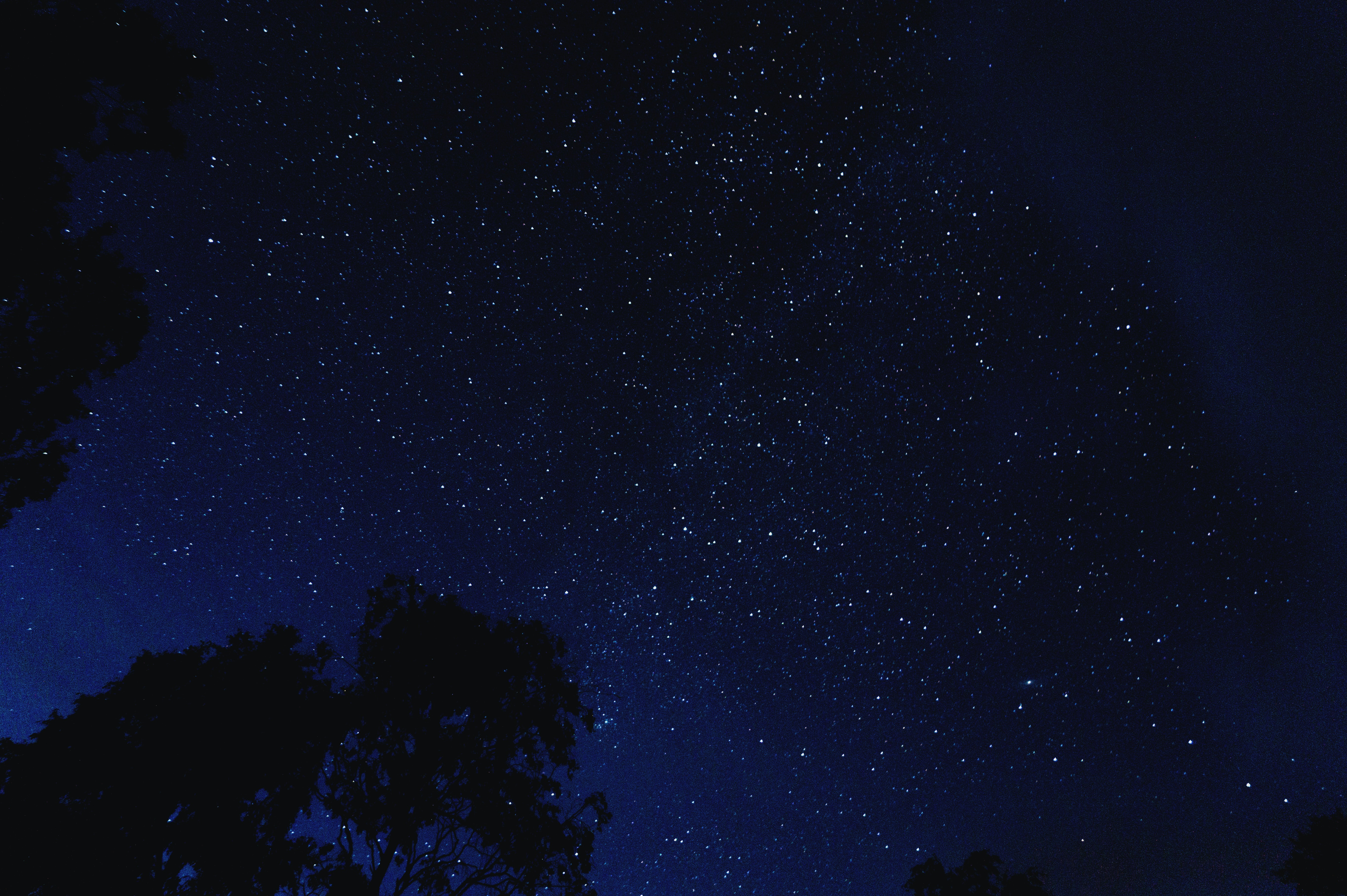 The star-studded dark blue night sky above the silhouette of trees.