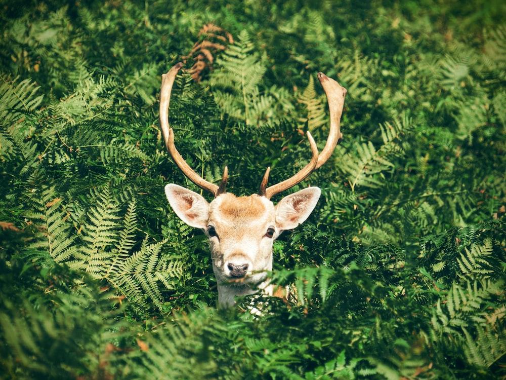 緑の植物に囲まれた茶色と白の鹿