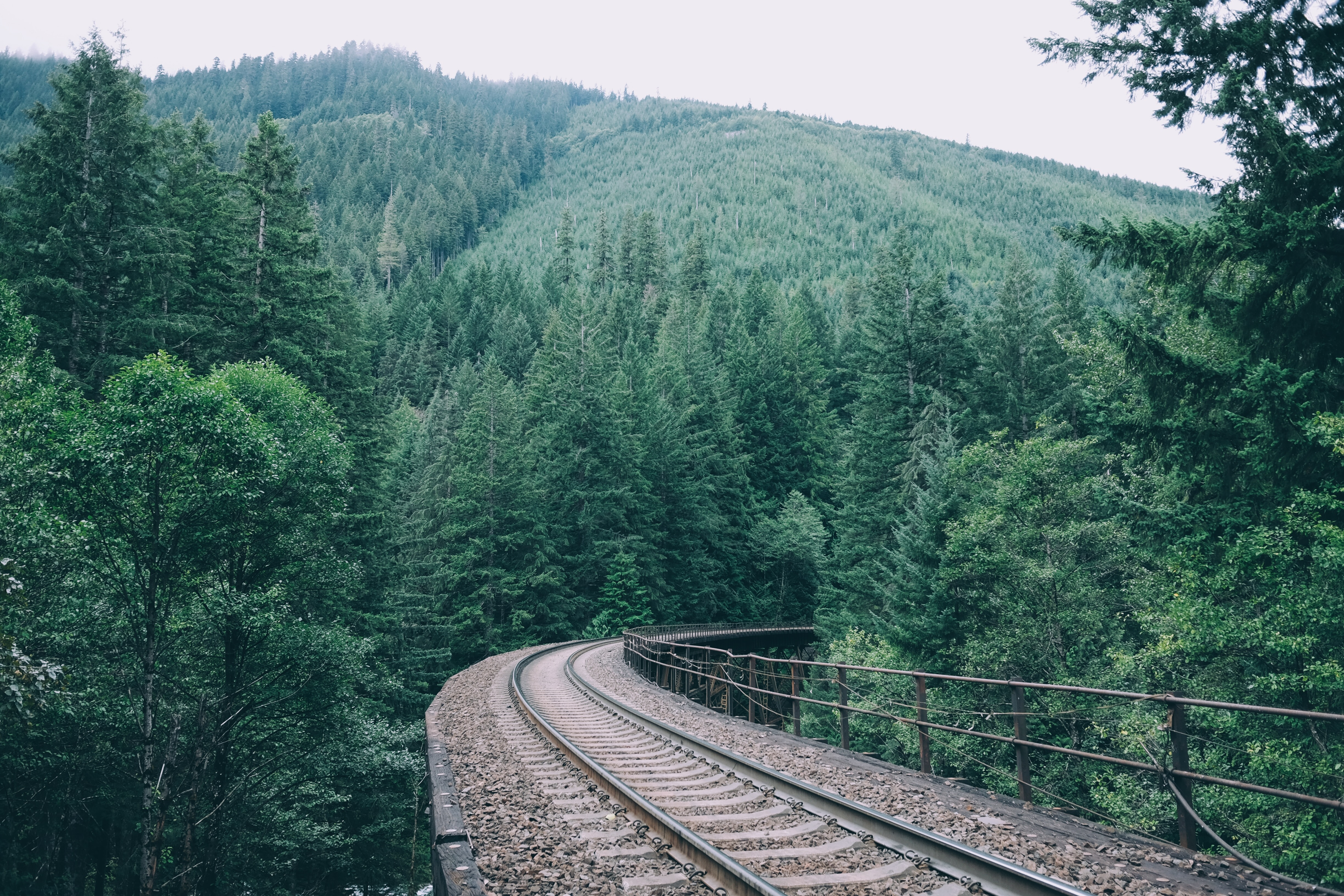 An elevated railroad track in a dense evergreen forest