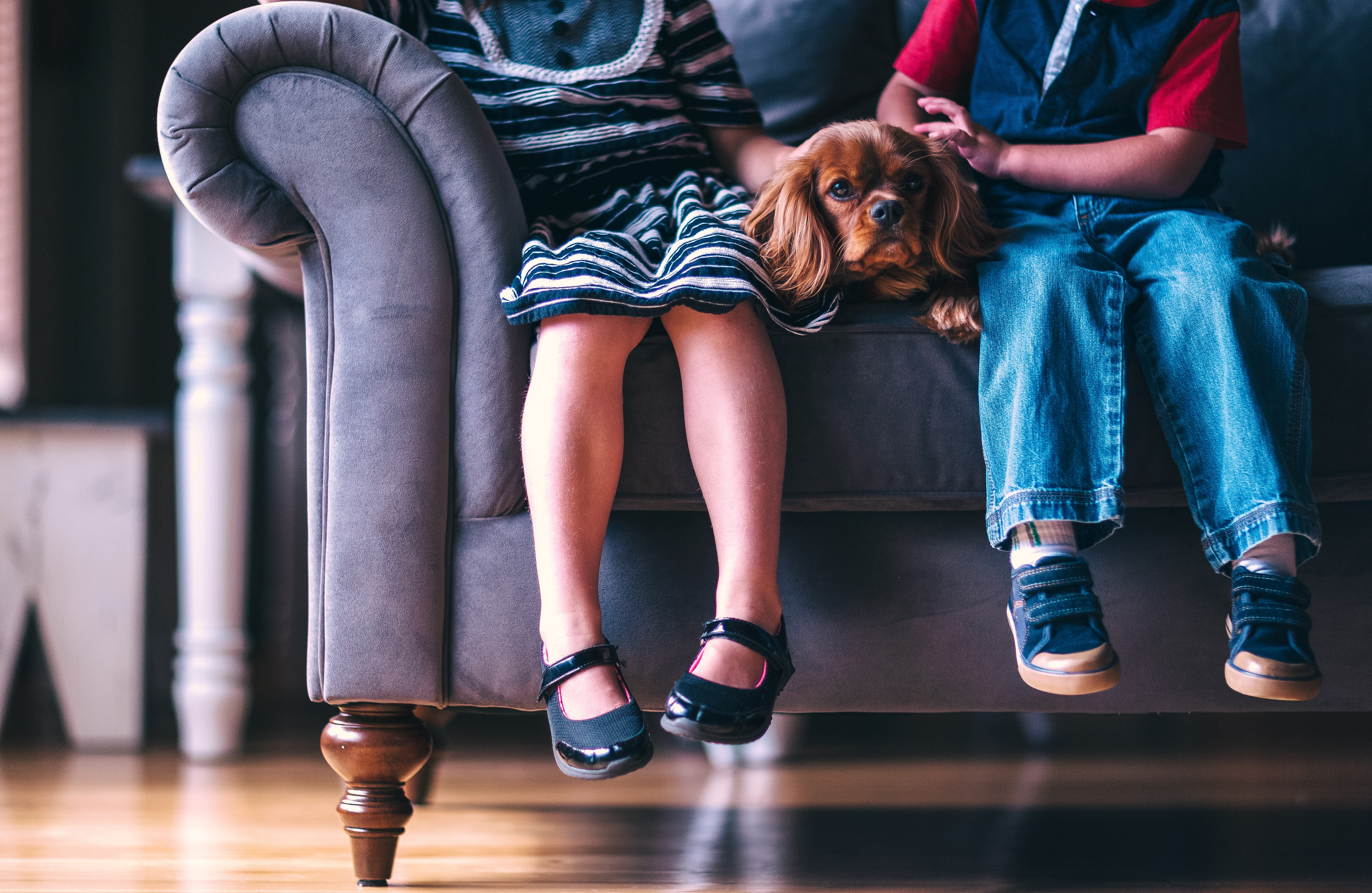 Two children on a couch are pictured shoulders down with a spaniel between them