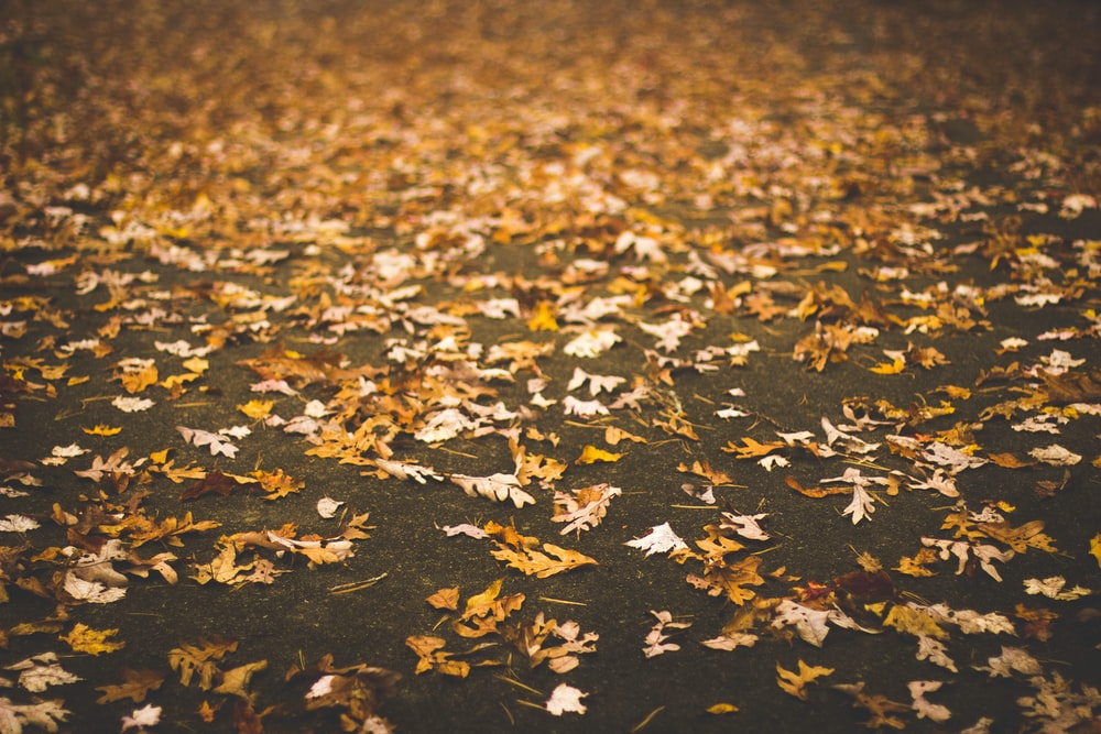 dried leaves on gray pavement