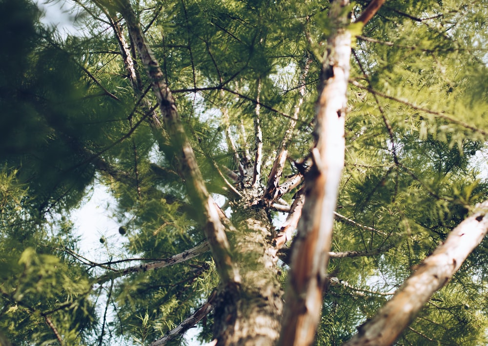 low angle photography of green tree