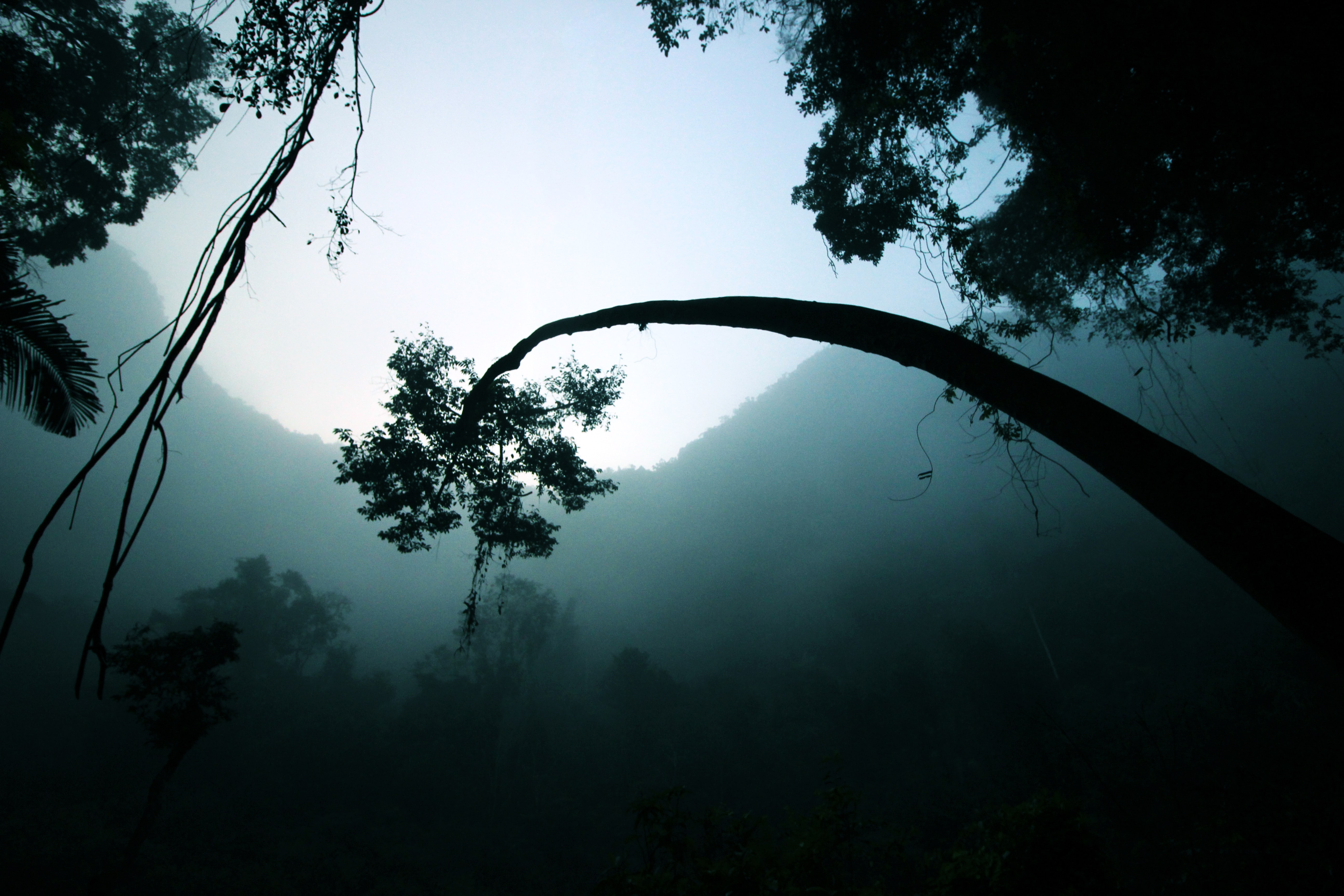 A bent tree in a dark and humid rainforest in Vietnam