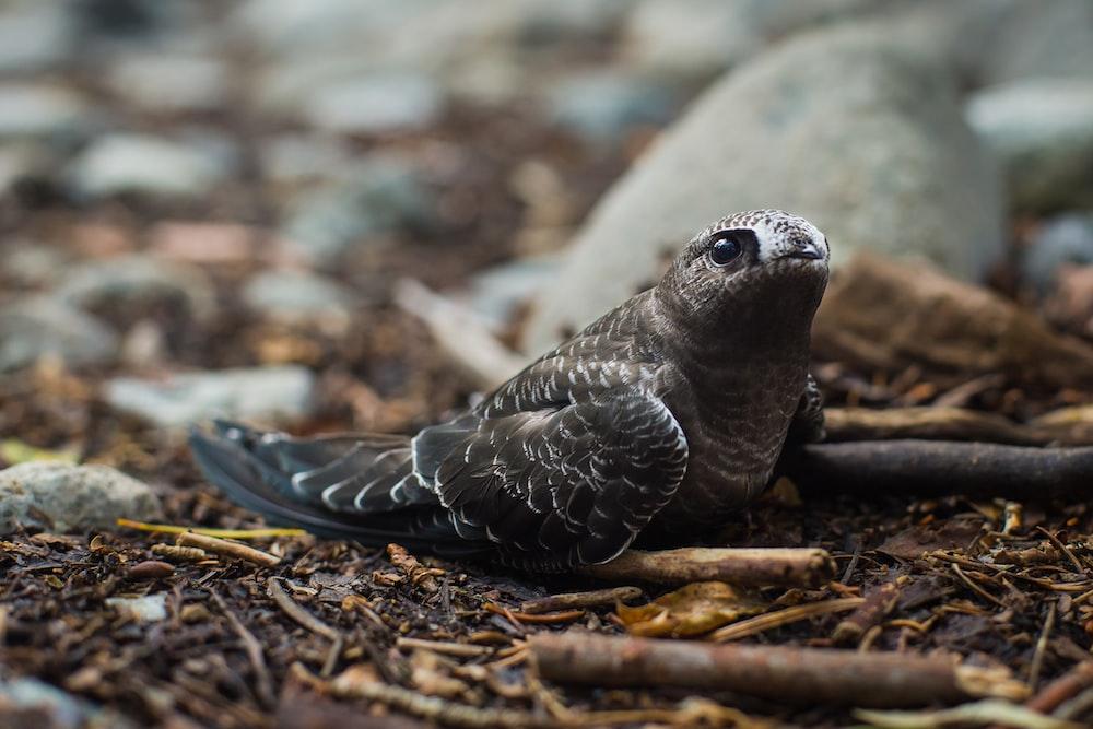 gray beakless bird on ground
