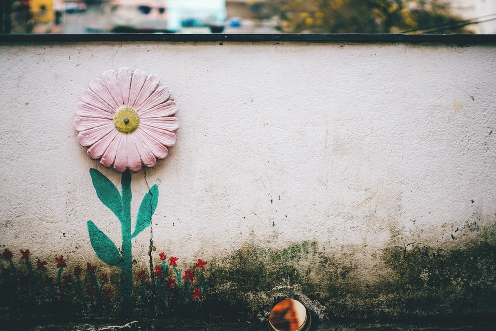 rule of thirds photography of pink flower art