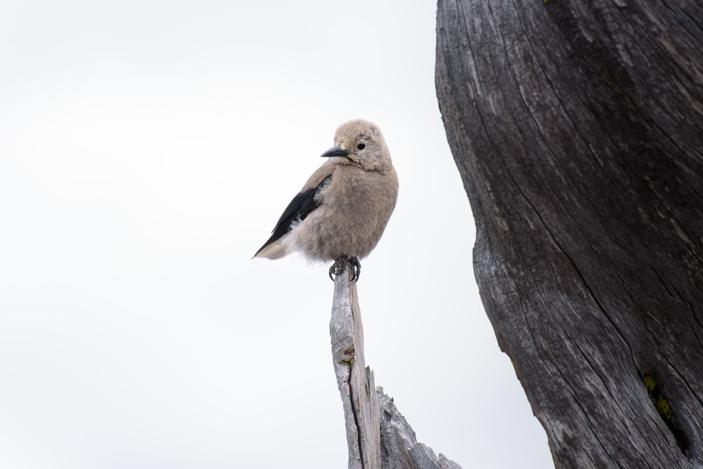 gray bird standing on edge of drift wood