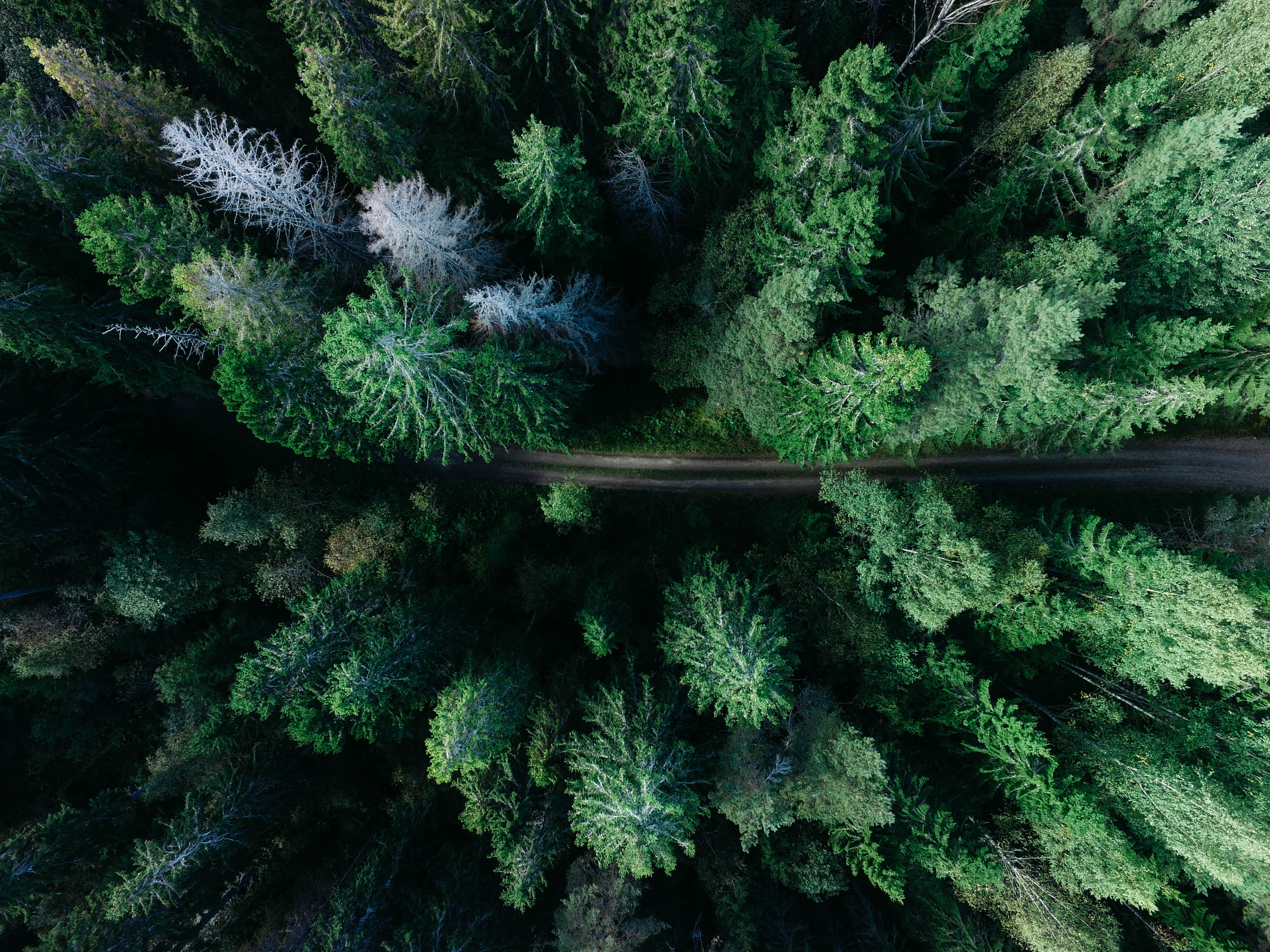 A drone shot of a dirt path through an evergreen forest in Gävle