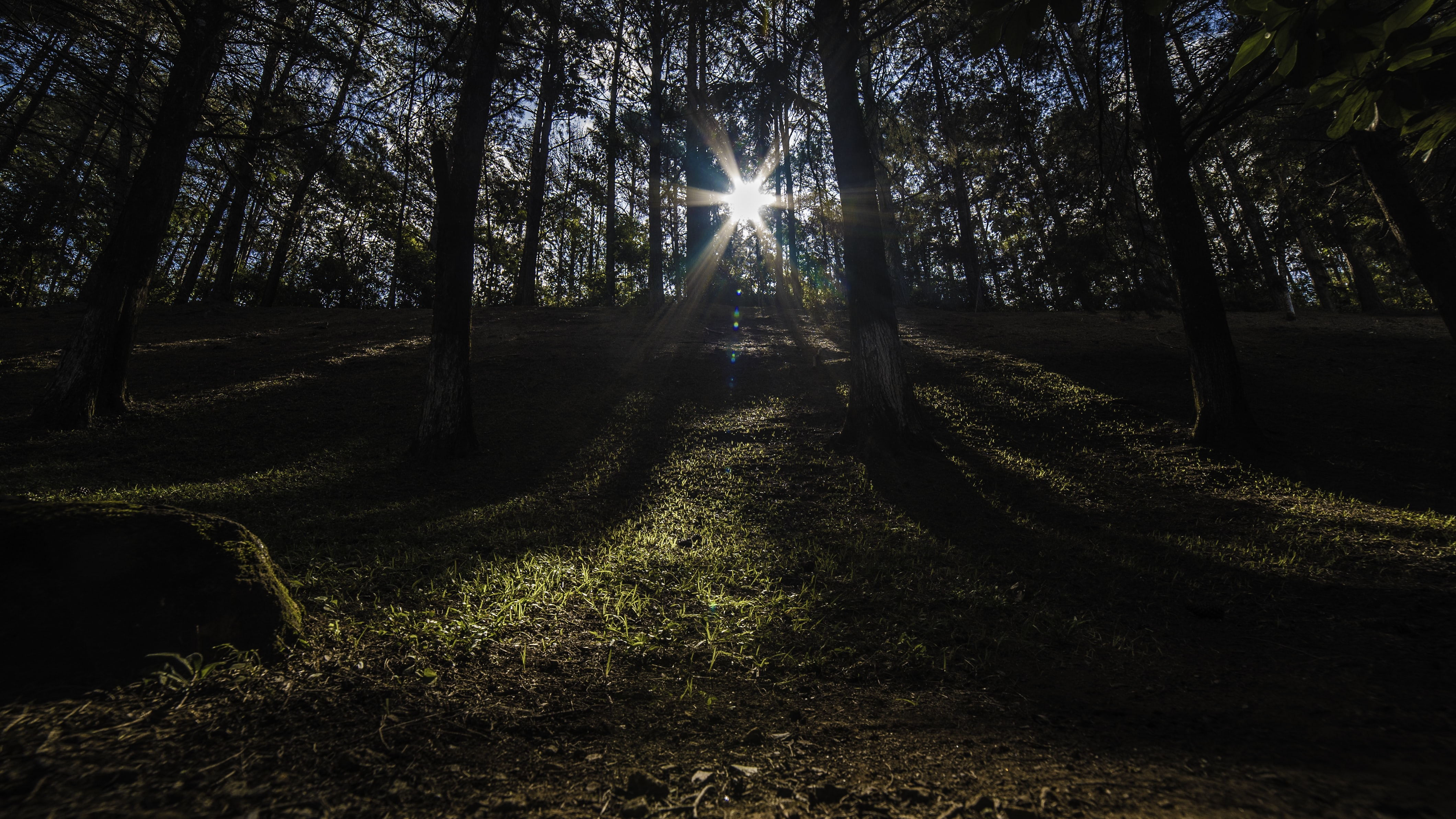 sun rays on forest during daytime