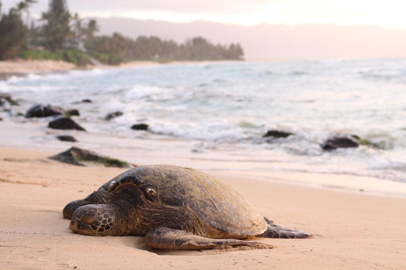 kostaryka tortuguero zolwie morskie